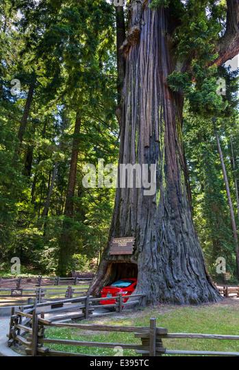 Drive Through Tree Stock Photos & Drive Through Tree Stock Images ...