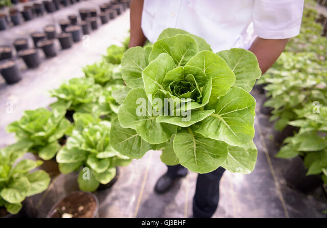 how to become a hydroponic farmer