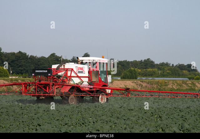clubroot map manitoba clubroot plasmodiophora brassicae cabbage stock photos clubroot