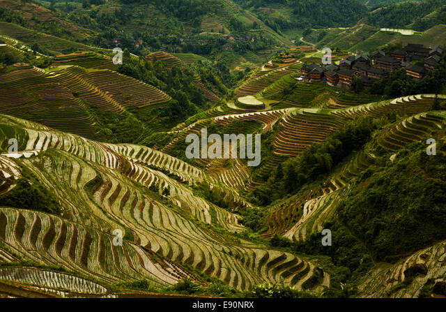 Terrace farming steep stock photos terrace farming steep for Terrace cultivation