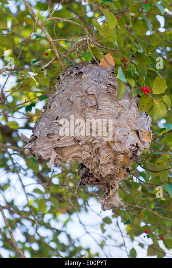 Bee Nest Tree Stock Photos & Bee Nest Tree Stock Images ...