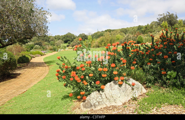 Kirstenbosch Stock Photos Kirstenbosch Stock Images Alamy