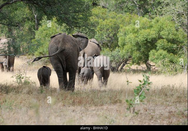 white elephant swingers