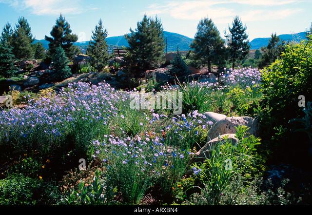 Garden Steamboat Colorado Flower Stock Photos Garden Steamboat Colorado Flower Stock Images