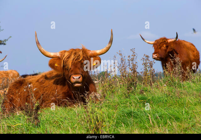 Feedlots Cattle Stock Photos & Feedlots Cattle Stock ...