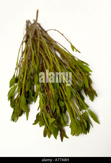 Qat Leaf Stock Photos Qat Leaf Stock Images Alamy - Khat in the us map