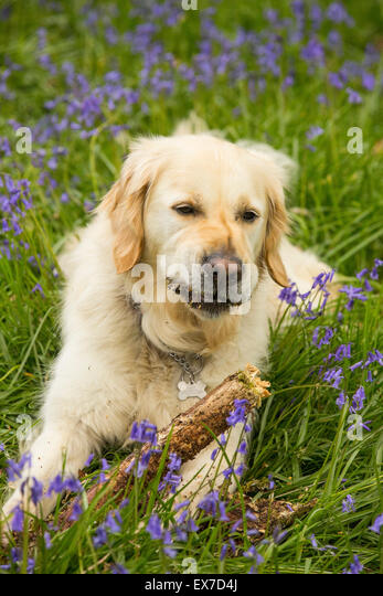 dog chewing wood stock photos dog chewing wood stock images alamy. Black Bedroom Furniture Sets. Home Design Ideas