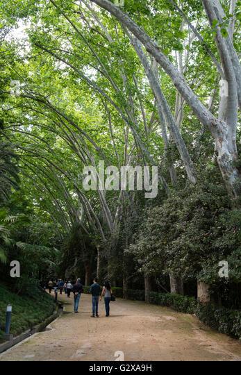 Arboleda stock photos arboleda stock images alamy for Bodas jardin botanico malaga