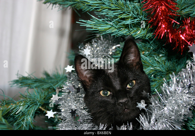 Cat Christmas Tree Stock Photos & Cat Christmas Tree Stock