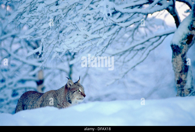 David Grant - Linx Lynx Where Our Love Begins EP