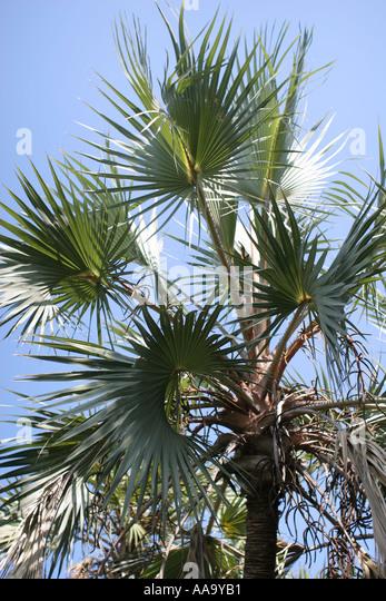 florida tropical plant flora growing life palm tree green