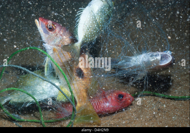 Small fish in net stock photos small fish in net stock for Small fish net