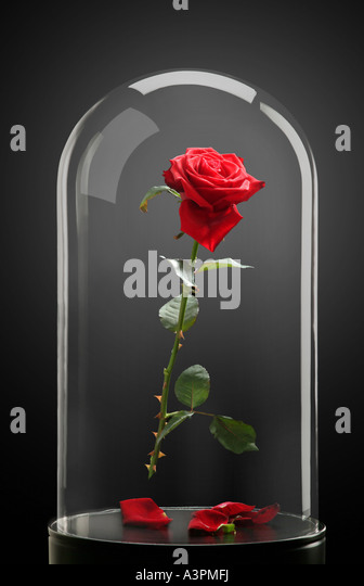 Imprisoning stock photos imprisoning stock images alamy for Rose under glass