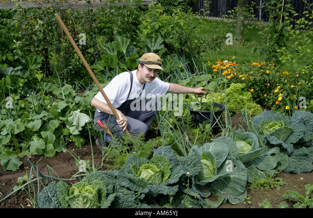 Spading fork stock photos spading fork stock images alamy for Gardening tools brisbane