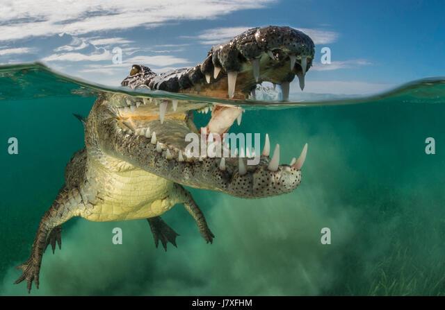 Reptile Gardens Stock Photos & Reptile Gardens Stock Images - Alamy