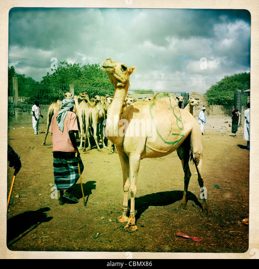 Hargeisa and Around | Travel Blog