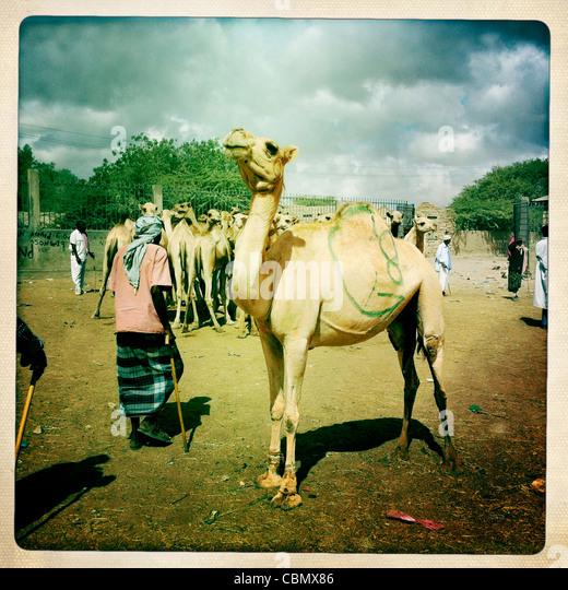 Hargeisa and Around | Travel Blog