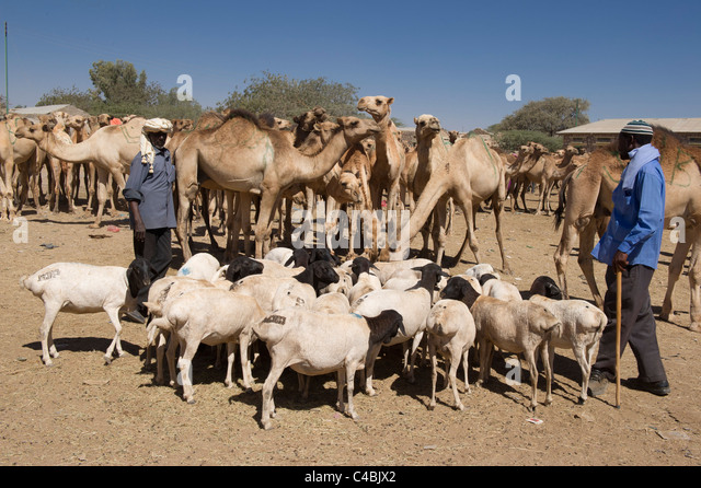 Hargeisa Somaliland Stock Photos &amp- Hargeisa Somaliland Stock ...