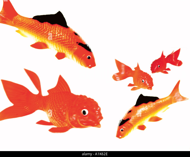 Unreal false fake stock photos unreal false fake stock for Rubber fish toy
