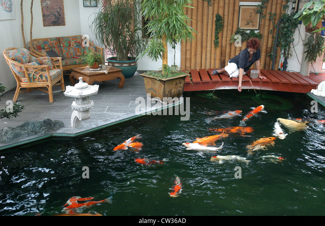 Man koi fish carp stock photos man koi fish carp stock for Indoor koi fish pond