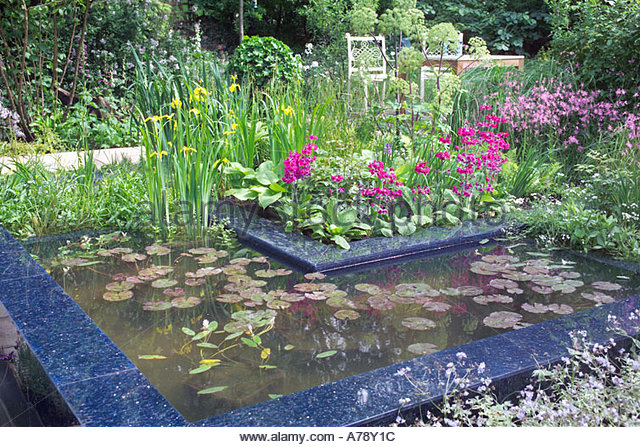 Aquatic water show stock photos aquatic water show stock for Pond friendly plants