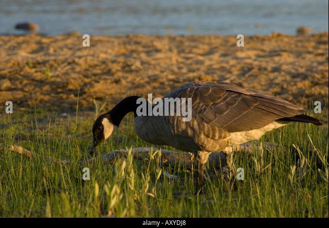 canada goose miami south beach
