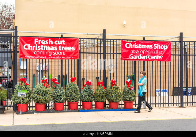 Walmart Fresh Christmas Trees