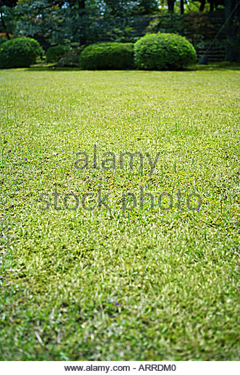 Oriental grasses stock photos oriental grasses stock for Oriental grass