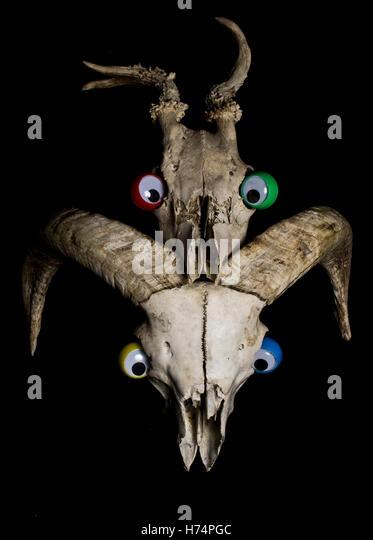 Funny Skull Stock Photos Amp Funny Skull Stock Images Alamy