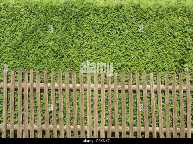 Conifer hedge brown stock photos conifer hedge brown for Gartenabgrenzungen mit pflanzen