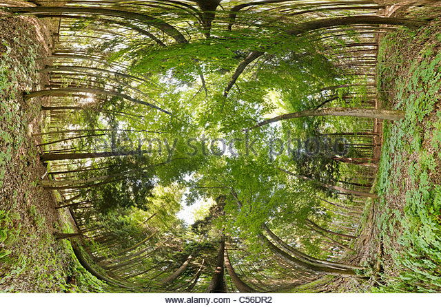 Carolinian Forest showing canopy understory and floor in Rouge National Park an urban & Understory Stock Photos u0026 Understory Stock Images - Alamy