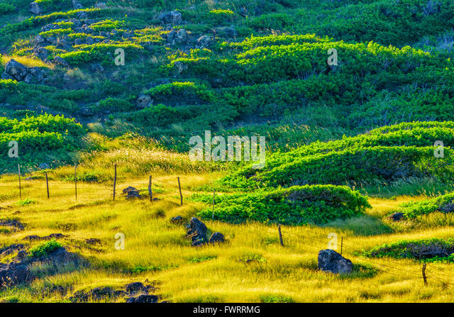 Cattle Ranching Hawaii Stock Photos Amp Cattle Ranching