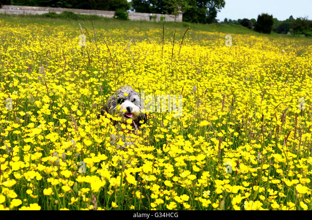 Bees Attracted To Dog Food
