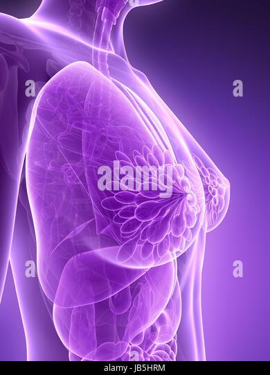 Science Anatomy Body Physiology Human Female Organs Stock Photos ...