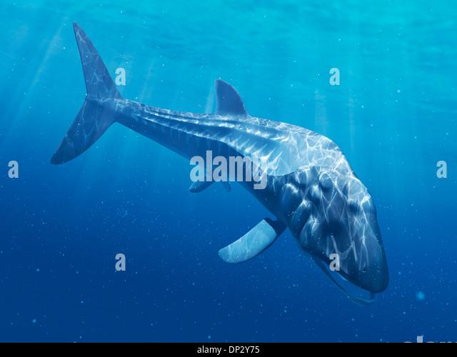 Leedsichthys Related K...