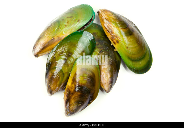 how to cook shell mussels