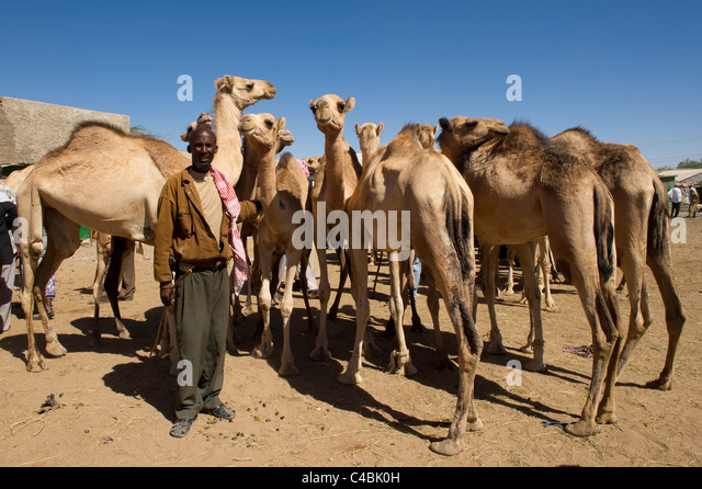Camel Eye Stock Images, Royalty-Free Images &- Vectors | Shutterstock