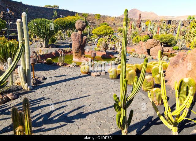 cactus plants inside jardin de cactus designed by csar manrique guatiza lanzarote canary