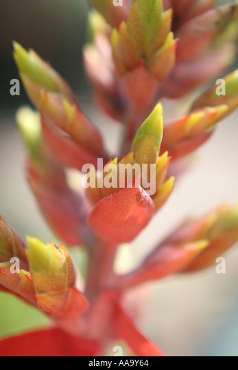 florida tropical plant flora growing life stock image