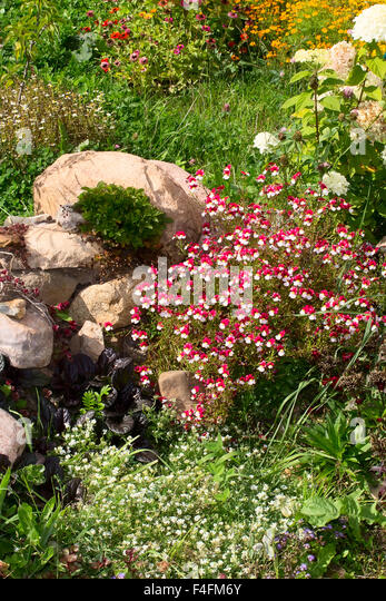 Evergreen tree and gardening large stock photos for Ornamental trees for flower beds