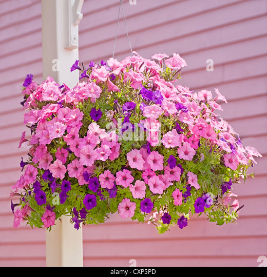 Pink and purple flower hanging basket image collections flower hanging wall basket stock photos hanging wall basket stock images hanging basket of pink and purple mightylinksfo