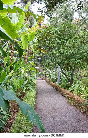Exotische stock photos exotische stock images alamy for Jardin botanico de tenerife