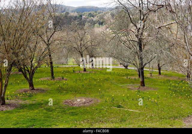 Adelaide botanic garden stock photos adelaide botanic for Garden trees adelaide