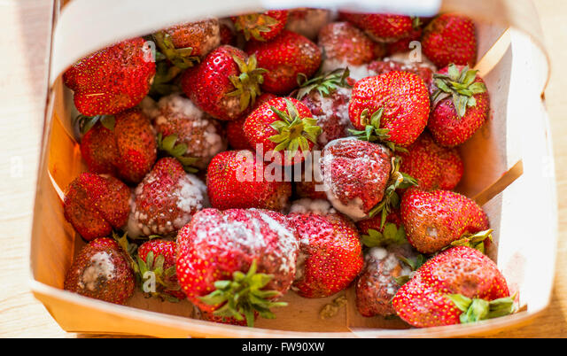 Rotten Strawberries Mouldy Strawberries St...