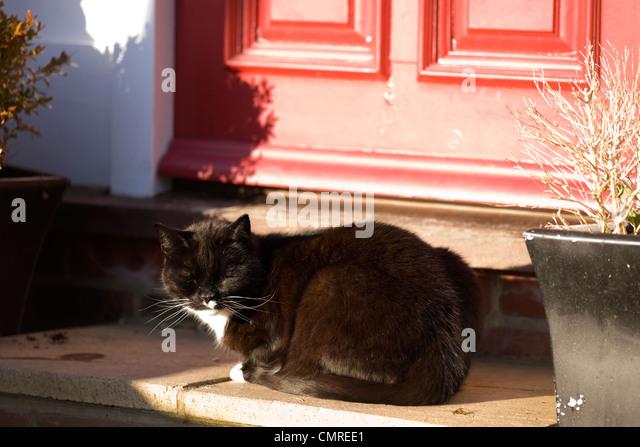 Aaa Dog And Cat Doors