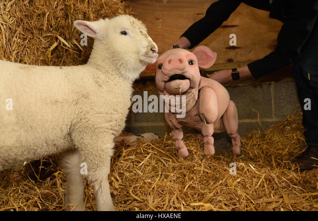 analysis of babe the sheep pig They are bullies to shaun and his flock, and they got told off in pig trouble by the farmer  he may be the baby of the  shaun the sheep wiki is a fandom tv.