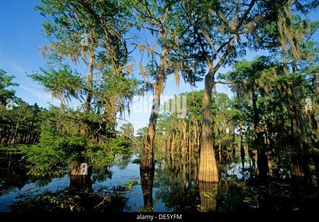 Atchafalaya Swamp Tours Lafayette La