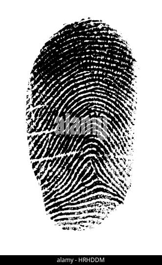 Fingerprint - Stock Image  sc 1 st  Alamy & Arch Fingerprint Stock Photos u0026 Arch Fingerprint Stock Images - Alamy