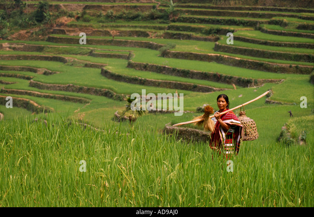 ifugao culture We will write a custom essay sample on ifugao culture or any similar topic specifically for you do not wasteyour time hire writer c comprehensive reporting of the.