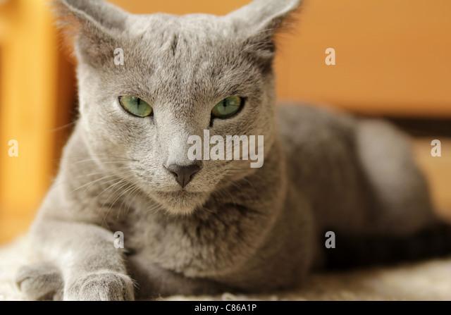 cat visitor center